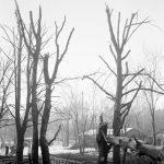 Skadade träd efter den sovjetiska bombfällningen över Eriksda